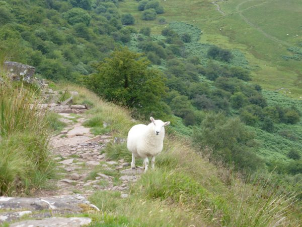 A Walk from Llanthony to Bal-Mawr and Capel-y-Ffin – Two